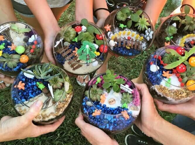 Miniature Fairy Garden Plants